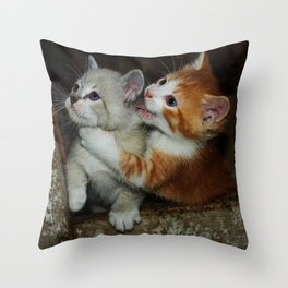 Sibling Rivalry, Kitten Style Throw Pillow