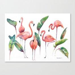 Pink Flamingos with some Strelizia Foliage Canvas Print