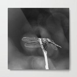 Dragon Fly Beauty Metal Print