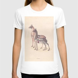 Vintage Illustration of Llamas (1809) T-shirt
