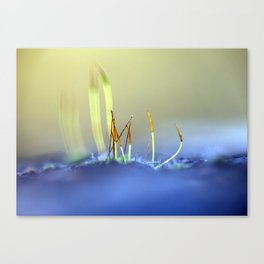 Capillary thread-moss 305 Canvas Print