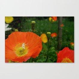 Flower Power. Canvas Print
