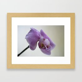 Orchid Photograph, pink and lilac flowers Framed Art Print