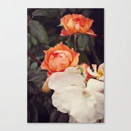 Roses III Canvas Print