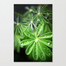 Leaf Rain Canvas Print