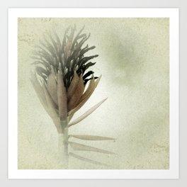 Bromeliad Flower Botanical Photograph Art Print