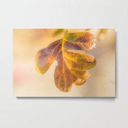 Sunny leaf Metal Print