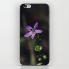 In a Dark Forest iPhone & iPod Skin