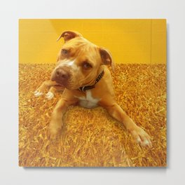 CHENiLLE (shelter pup) Metal Print