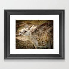 Razzie Kangaroo Framed Art Print