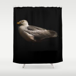 Herring Gull Shower Curtain