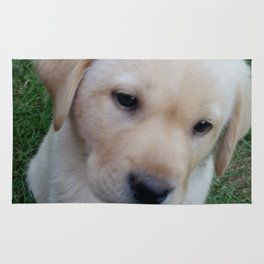 Whatever you want Lab puppy Rug