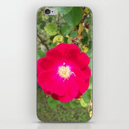 Wild Rose iPhone Skin