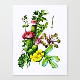 Vintage Wildflowers Thistle Canvas Print