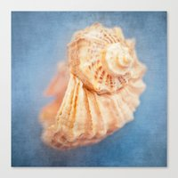 seashell Canvas Prints featuring Seashell by The Last Sparrow