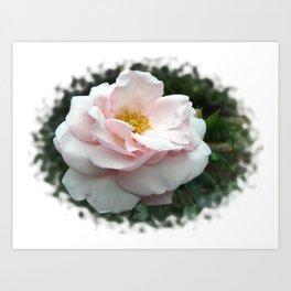 Peace Rose 2 Art Print