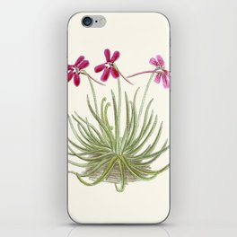 Pinguicula gypsicola iPhone Skin