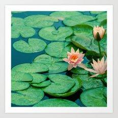 Lily Pond Art Print