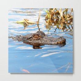 Watercolor Alligator 13, Okefenokee Swamp, Geogia Metal Print