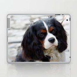 King Charles Cavalier Portrait Laptop & iPad Skin