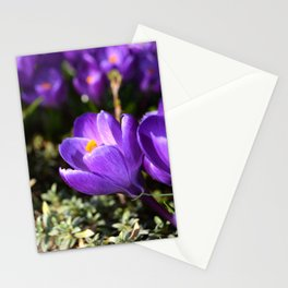 Purple Love Stationery Cards