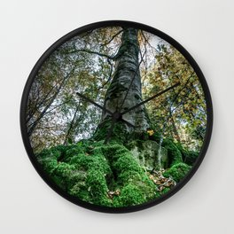 Image seen from below of a tree with large roots covered by bright green moss Wall Clock
