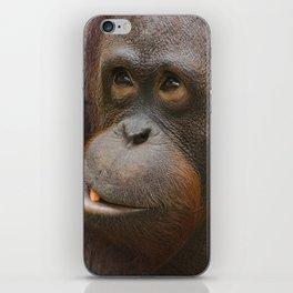 Orangutan Face iPhone Skin