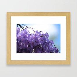 Flowering Jacaranda Tree Framed Art Print