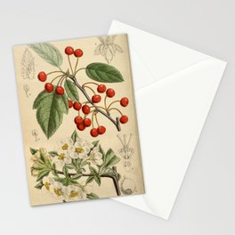 Malus sargentii, Rosaceae Stationery Cards