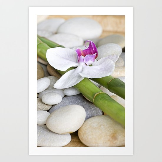 white Orchid flower  and green Bamboo still life Art Print