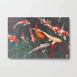 Koi Carp Fish Metal Print
