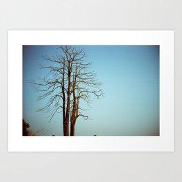 The Last Tree Art Print