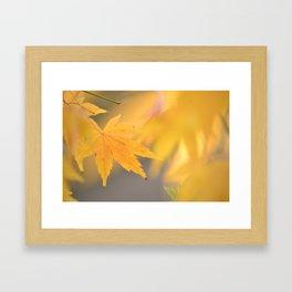 Autumn Gold Framed Art Print