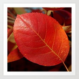Autumn coppery red Juneberry berry leaf Art Print