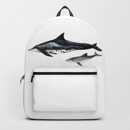 Rough-toothed dolphin (Steno bredanensis) Backpack