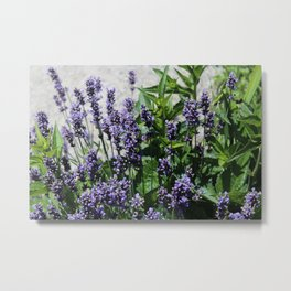 Bush of Lavender Metal Print