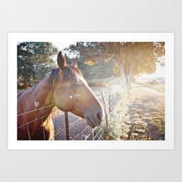 Horse Headsot Art Print