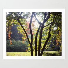Signs of Autumn Art Print