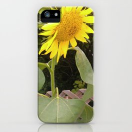 The Surviving Sunflower iPhone Case