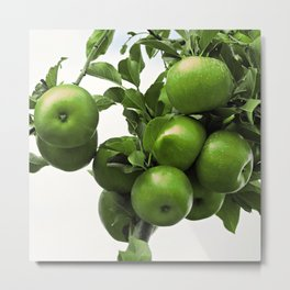 Green apples photography on a branch Metal Print
