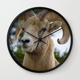 Big Horn Sheep in Jasper National Park Wall Clock