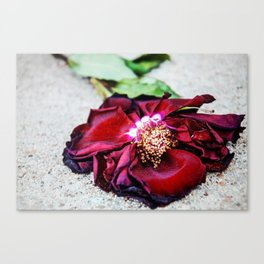 Wilted Rose Canvas Print