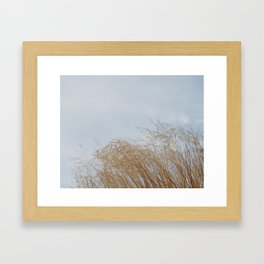 Golden weeds in summer Framed Art Print