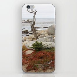 Dead Cypress At Pebble Beach iPhone Skin
