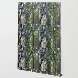 Bamboo Forrest Wallpaper