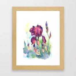Watercolor iris flowers Framed Art Print