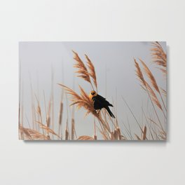 Feathered 17 Metal Print