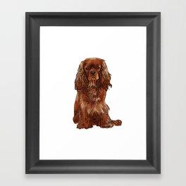 Cavalier King Charles Spaniel - Ruby Framed Art Print