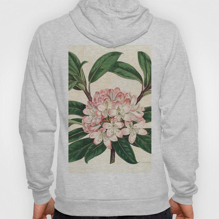 Rhododendron maximum 'Great laurel' Hoody