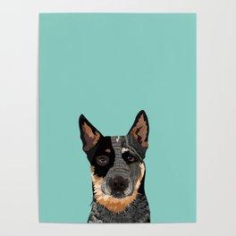 Australian Cattle Dog blue heeler pet portrait art print and dog gifts Poster
